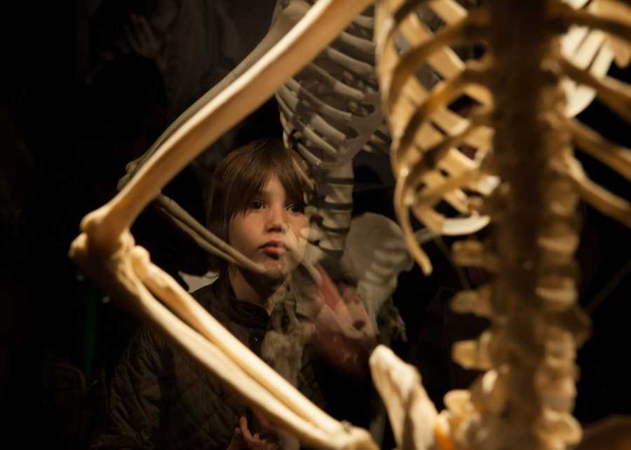 """Alessandro Long, 10, reacts to a skeleton specimen in the exhibit. """"It's interesting to learn a lot,"""" says Long. """"Our body is more than bones, there are inside organs and muscles too."""" The exhibit will continue until this April."""