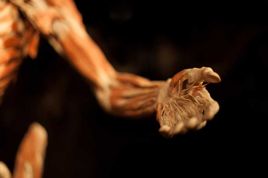 """A hand of a cadaver in """"Body Worlds Vital"""", which is created by Dr. Gunther von Hagens, the inventor of the plastination technique. It has been the only exhibition with an official body donation program. """"We don't tell people not to smoke&#x3B; we don't tell them to watch what they eat or to exercise,"""" said Gold. """"But when the public leave, they have a better understanding of who they are, what they could be."""""""