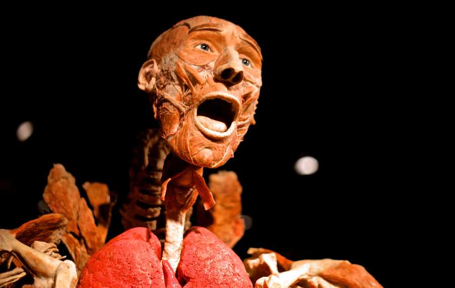 """One of the 15 whole cadaver in """"Body Worlds Vital"""", an exhibit at the second floor of Quincy Market.""""Two days after we opened, we have probably over 2000 visitors already,"""" said Gold, the organizer of the exhibit."""