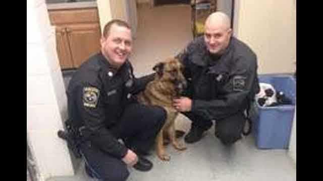 Ashland dog rescue 1.27