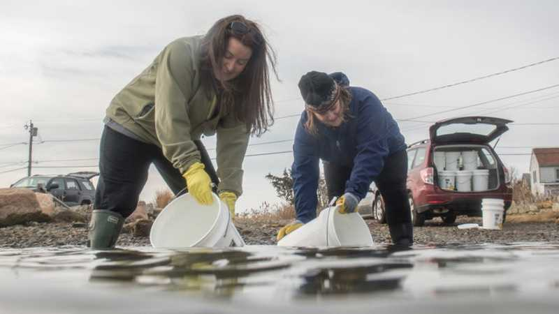 Alison Darnell, left, and Heather Ahearn gather 5-gallon buckets of seawater.
