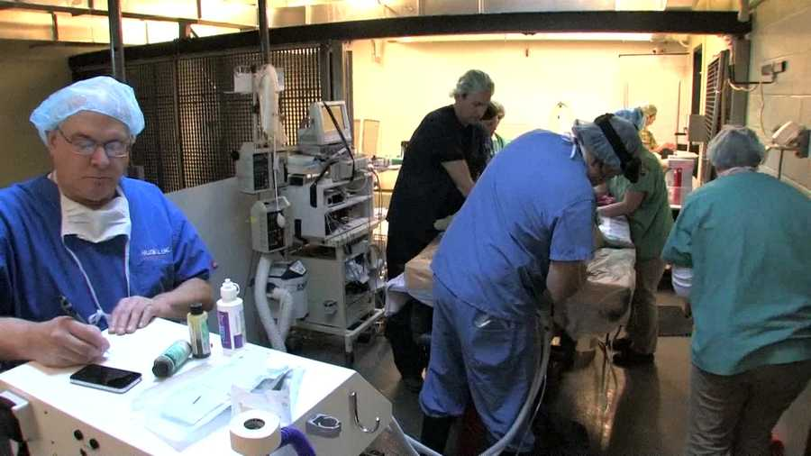 Veterinary ophthalmologist Dr. Ruth Marrion recommended the cataract surgery and assembled a surgical team.