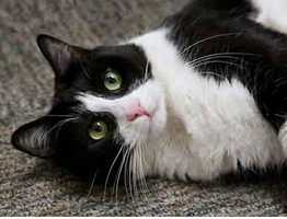 Click here to meet more lovable pets looking for homes at the Animal Rescue League of Boston!
