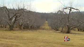The orchard was planted in the 1920's, and today, yields, heirloom varieties.