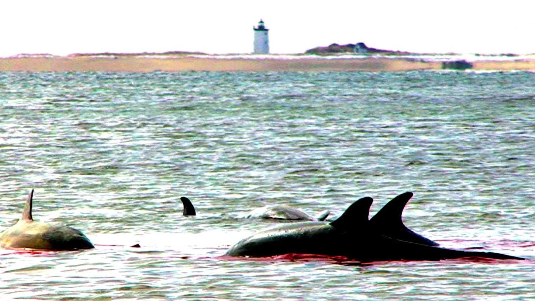 Dolphin stranding 3.6