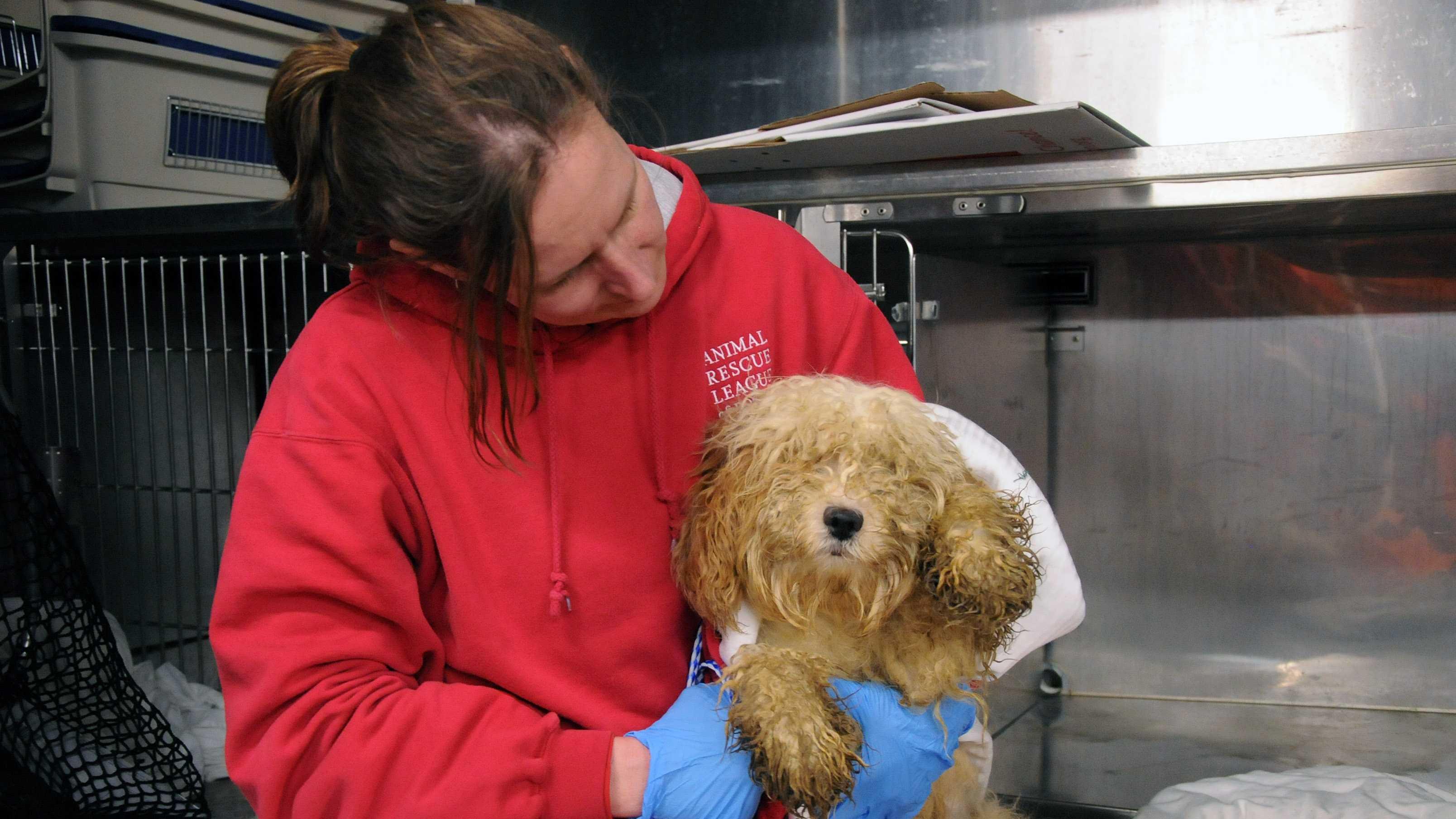 ARL rescued dog