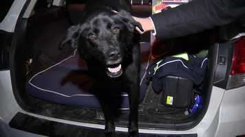 A search dog with an aggressive form of bone cancer is being put to sleep Wednesday, and on Tuesday she got to go on one final mission with her team.