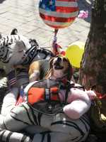 """Photograph of a """"comfort"""" dog playing in a pile of stuffed animals at the Copley Square memorial."""