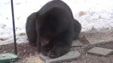 img-Family records black bear in backyard of home