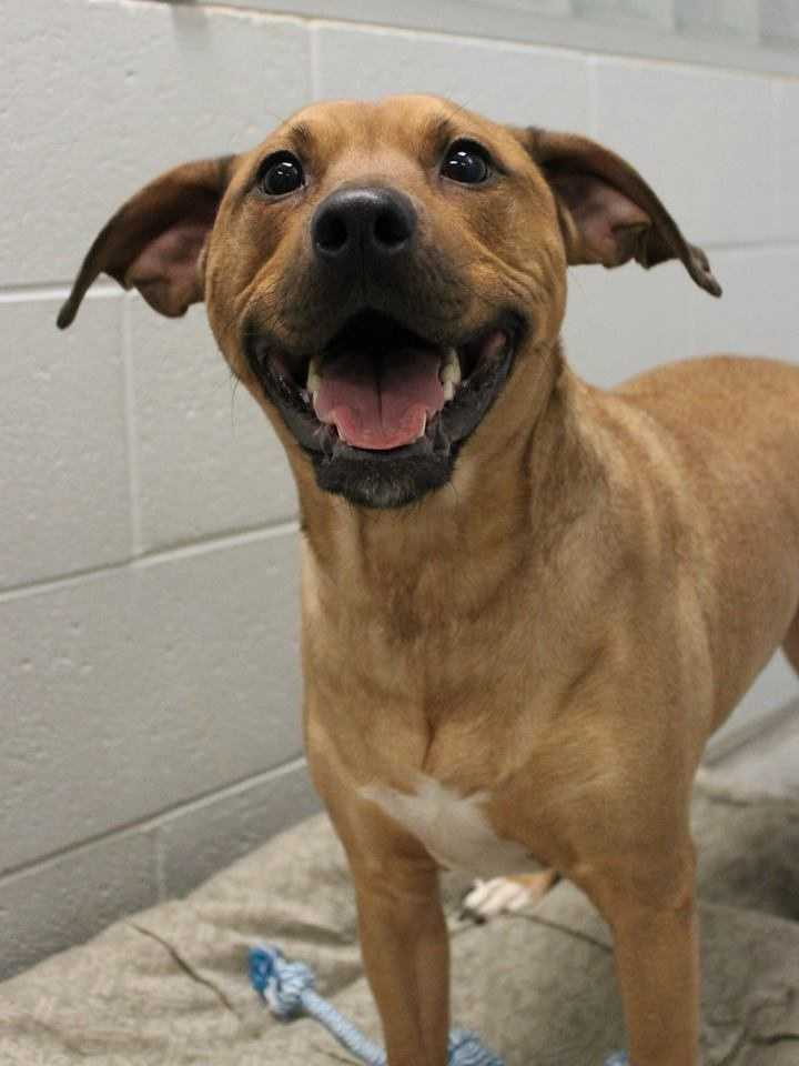 My name is Bauer! For more information about me, please call or visit the shelter. Buddy Dog Humane Society, Inc. Sudbury, MA (978) 443-6990 or info@buddydoghs.com