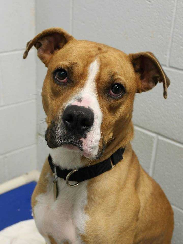 My name is Bruno! For more information about me, please call or visit the shelter. Buddy Dog Humane Society, Inc. Sudbury, MA (978) 443-6990 or info@buddydoghs.com