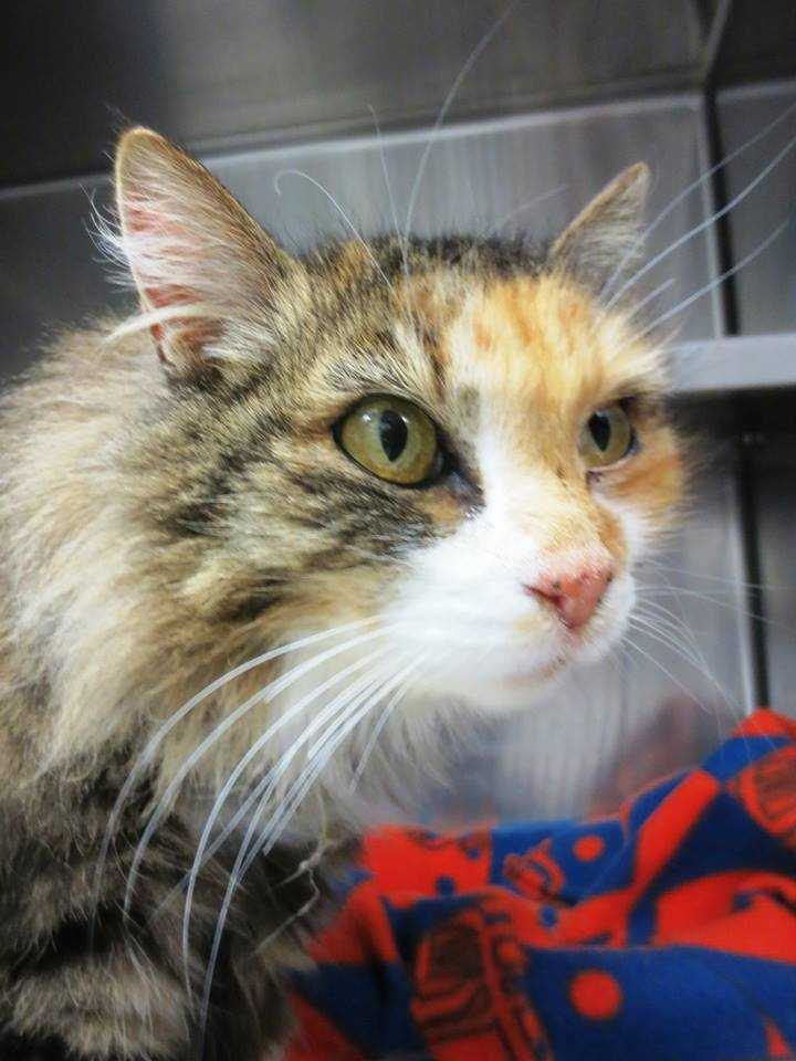 My name is Cynthia and I am a 5-year-old female DLH. For more information about me, please call or visit the shelter. Buddy Dog Humane Society, Inc. Sudbury, MA (978) 443-6990 or info@buddydoghs.com