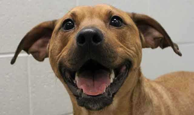 Check out some of these adorable furry pals looking for new homes at Buddy Dog Humane Society!