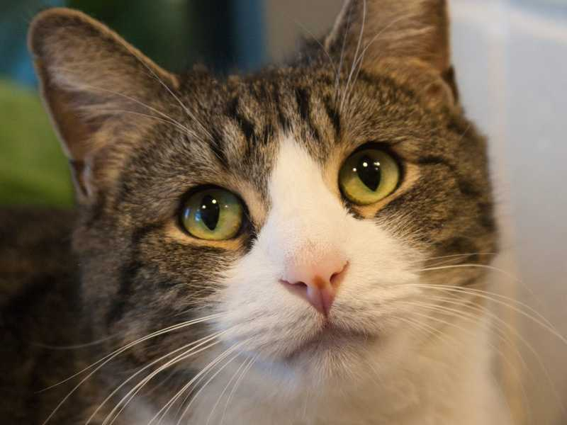 Storm, 6, is a playful guy looking for a new home He does well with kids, but doesn't have a history with dogs. He loves to play and snuggle. For more on Storm, click here.