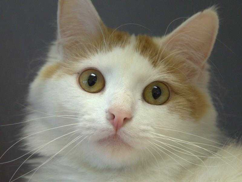 Check out some of these adorable furry pals looking for new homes at the MSPCA!