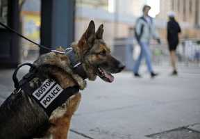 A Boston Police bomb detection dog sits near the finish line of the 118th Boston Marathon Monday, April 21, 2014 in Boston.