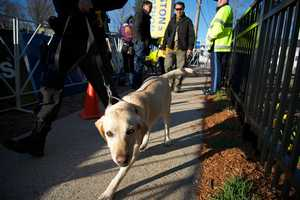 A police dog searches the area at the starting line of the Boston Marathon in Hopkinton, Mass.