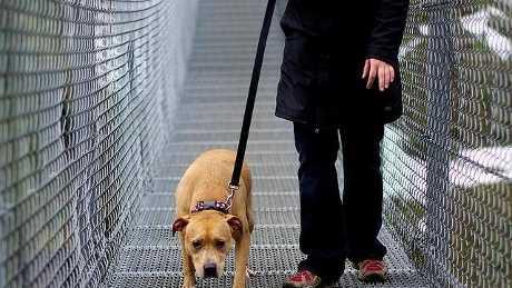 Pitbull-footloosiety-jpg.jpg
