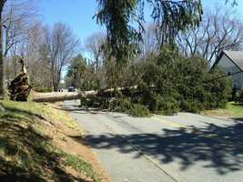 A tree took down power lines on Concord Street in Ashland.