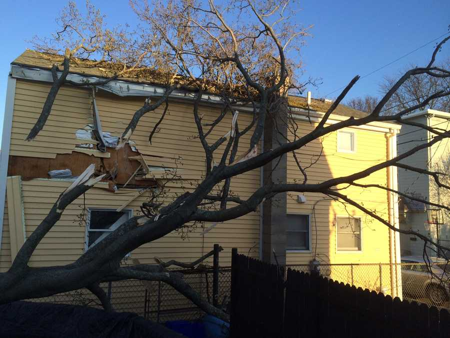 Strong winds brought down this tree in Salem Thursday afternoon.