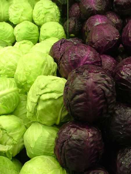 48. Cabbage