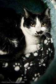 Connie, 3, and her friend Troy were found outside someone's barn. Connie is a purring machine and you can hear her as soon as you walk in the room. She is a very pretty girl who is looking for a loving forever home to call her own. For more on Connie, click here.