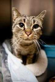 """Consuela, 2, was found outside of a Taco Bell. She has a bit of a """"cat-itude"""", and has been described as a """"spit-fire."""" She's feisty but sweet and caring! For more on Consuela, click here."""