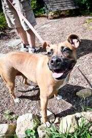 Pepita, a 3 year old Boxer mix, is a very special girl who has been through a lot. Given the right loving and supportive family, she would make an incredible companion. To meet Pepita, click here.