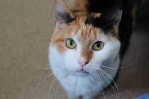 Check out some of these adorable furry pals looking for new homes at the Merrimack River Feline Rescue Society!