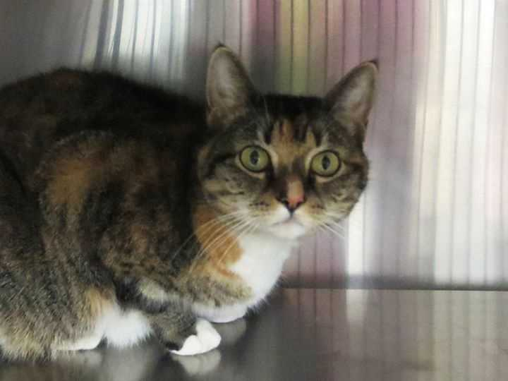 My name is Caitlyn and I am a 4-year-old DSH. For more information about me, please call or visit the shelter. Buddy Dog Humane Society, Inc. Sudbury, MA (978) 443-6990 or info@buddydoghs.com