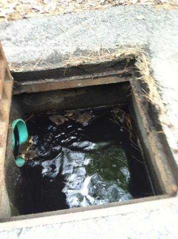 Police responded Saturday morning to a report of ducklings trapped in a storm drain on Beach Street.