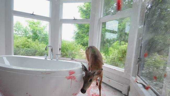cohasset-doe-deer-picture-window.jpg