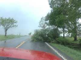 Tree Down just outside Bridport, VT