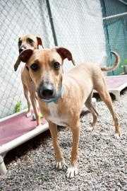 Howard, 1, a hound mix came from Jamaica. He was found emaciated and scared, but is now a year old and ready for his forever home. He gets along well with other dogs too! Click here for more info.