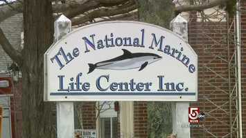 The National Marine Life Center is in Buzzards Bay.