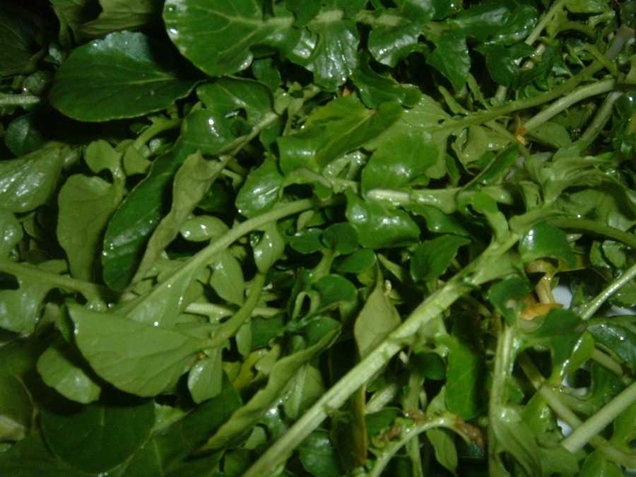 #1 Watercress: 100 nutrient density score.