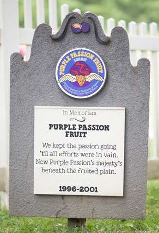 Purple Passion Fruit1996 – 2001Swirls of Raspberry-Blackberry & Passion Fruit Sorbet With Other Natural Flavors.