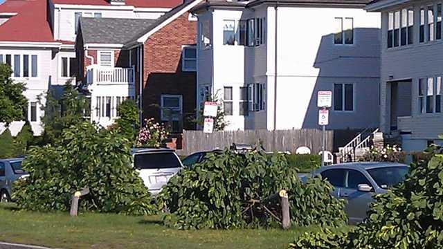 South Boston trees cut