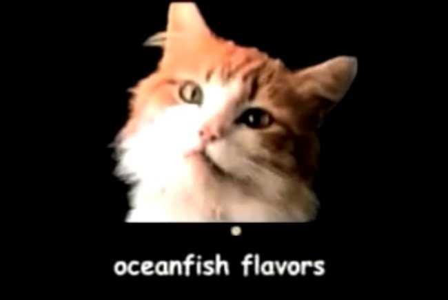 """Meow, meow, meow, meow,"" Meow Mix"