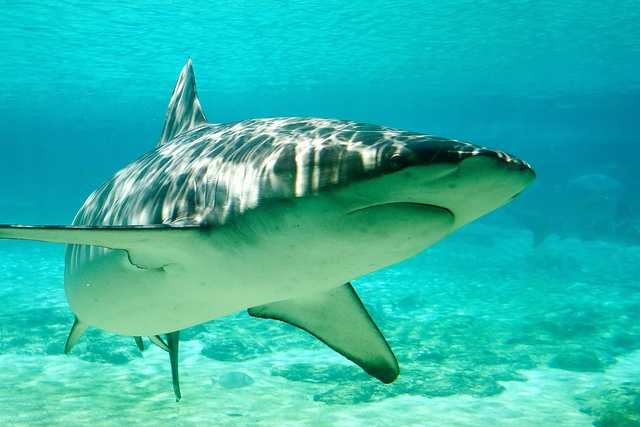 Check out the number of shark attacks in the Continental United States from the 1800s through 2012, according to the Florida Museum of Natural History.
