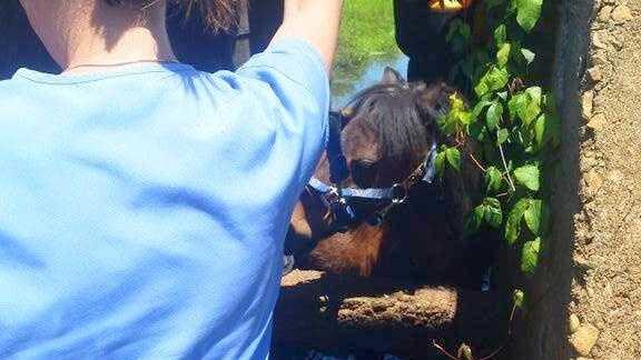 Duxbury Horse Rescue 0623 04 cropped.jpg