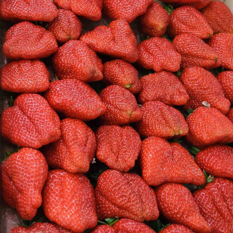 Berries can be exposed to germs and bacteria during processing and handling by an infected worker.