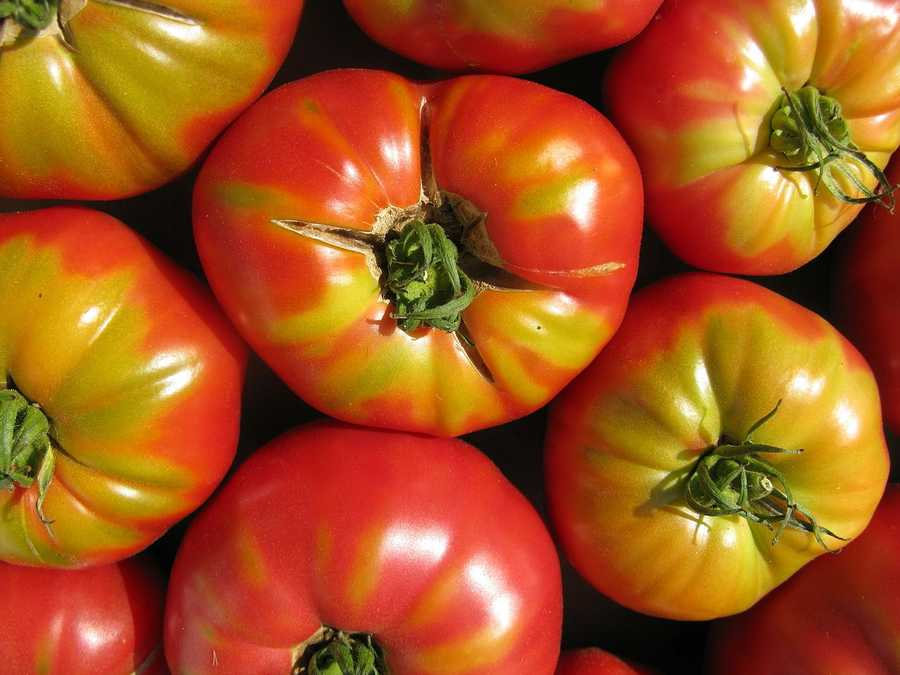 Tomatoes are most often contaminated as they grow, when salmonella enters a tomato plant through its roots, flower or small cracks in the skin or stem.