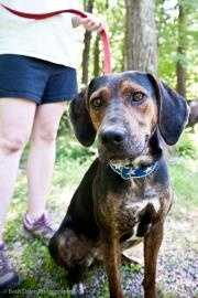 Trixie is a young, female Coonhound mix. She is about 40 pounds and very sweet! She is fine with other dogs, but would do best as an only animal in a home. Trixie is not a fan of sharing food, etc. She is a graduate of the KY Camp Canine Training Program where she learned basic commands (sit, down, stay) and other skills she needs to interact politely with humans and dogs. Click here for more.