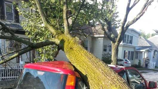 A tree crushed this car parked on Caswell Avenue in Methuen.