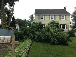 A tree nearly fell on a home in Woburn