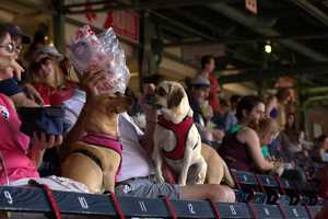 Dozens of dogs were in attendance at Fenway Park Sunday for the Futures at Fenway game.