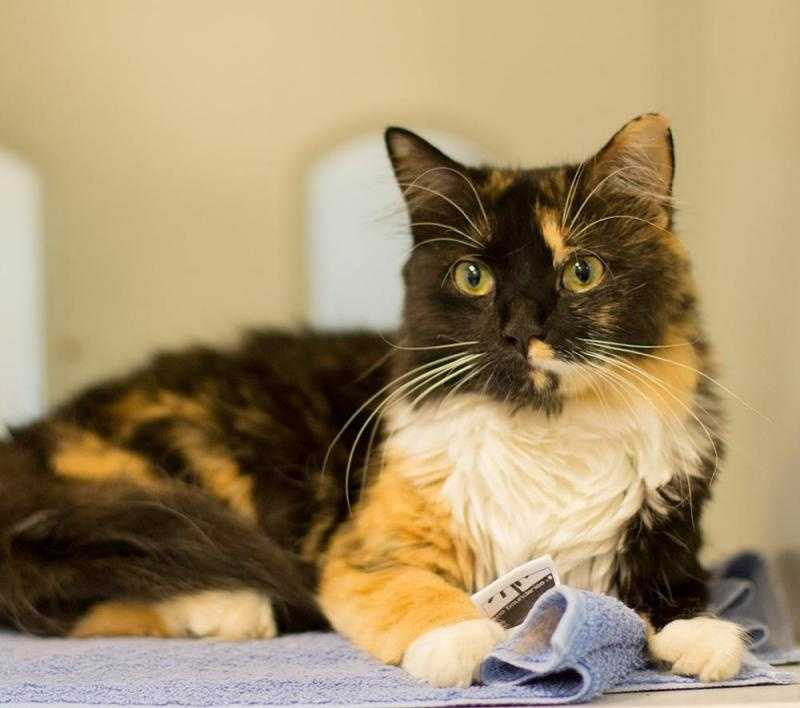 Florence, 1, is an outgoing, awesome kitty. She is super lovable, sweet and playful. She loves attention and being petted. Click for more.