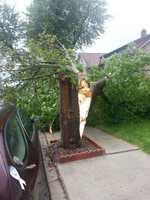 Tree snapped in half in Revere.