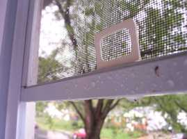 Window Screens: Once a year